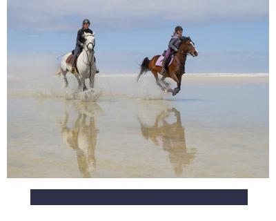 Noordhoek Unplugged | Horses of Noordhoek
