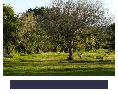 Noordhoek Unplugged